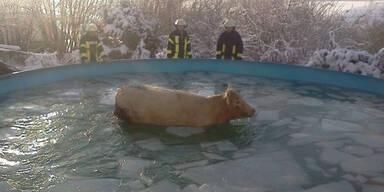 Kuh Pool
