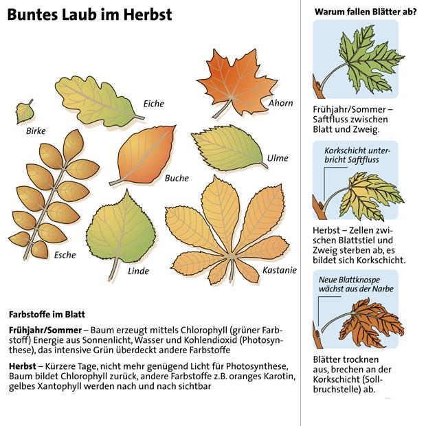Herbst: Darum verfärbt sich das Laub :: wetter.at