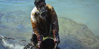 Ölkatastrophe vor Mauritius: Wettlauf gegen die Zeit