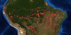 """Finnischer Premier über Amazonas-Brände: EU muss """"sofort handeln"""""""