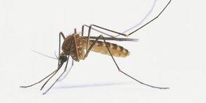 Gefährliches West-Nil-Virus hat Österreich erreicht