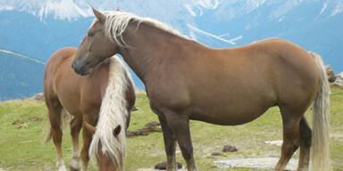 Touristen fütterten Stute fast zu Tode