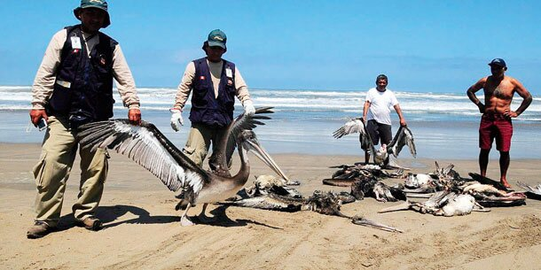Rätselhaftes Tiersterben in Peru