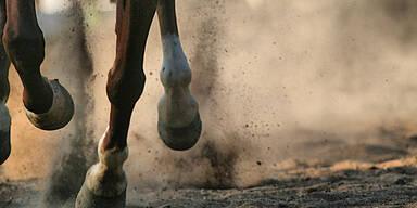 10-Jährige von Pferdehuf am Kopf getroffen - tot