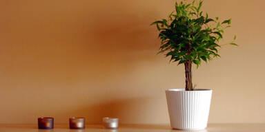 pflanze_sxc.jpg