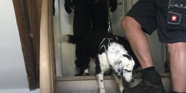 Frau ließ 14 Hunde auf engstem Raum in OÖ vegetieren - zwei starben