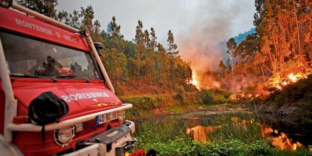 62 Tote nach Waldbrand in Portugal
