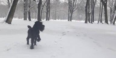 praterhund.jpg