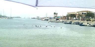 puertopollensa_enten.jpg