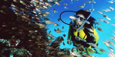 reef-4.jpg
