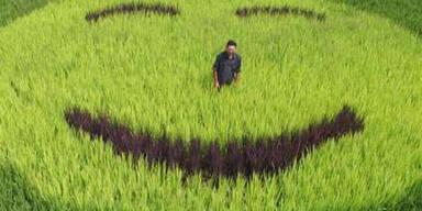 Ein Bauer aus China beweist mit verschiedenfarbigen Reissorten Humor