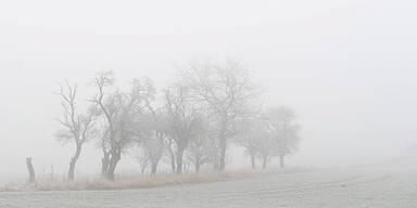 Frost nebel Winter Herbst Raureif
