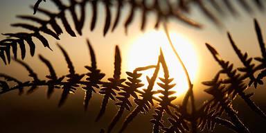 Winter Sonne Farn Raureif Frost