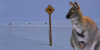 schneeaustralien.jpg