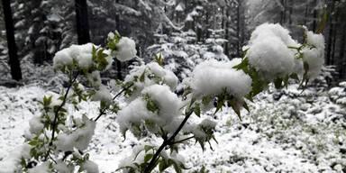 snow054.jpg