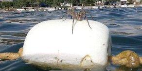 Riesen-Spinne sorgt für Panik bei Kroatien-Urlaubern