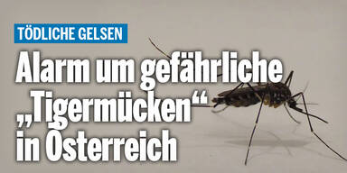 stechmücke_wetterAT_relaunch.jpg