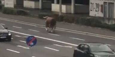 Polizei warnt: Stier mitten in Linz entlaufen