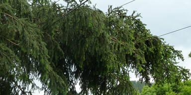 strom2.jpg