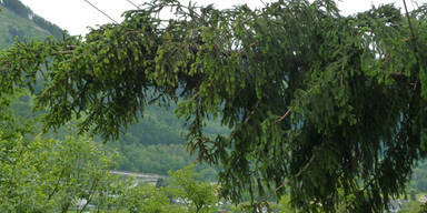 strom3.jpg