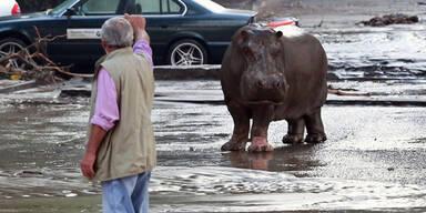 Unwetter: Raubtiere aus Zoo geflohen