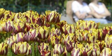 tulpenvolksgarten.jpg