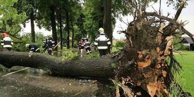 In der Region Knittelfeld (Bezirk Murtal) wurden durch das Unwetter Bäume entwurzelt