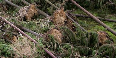 Entwurzelte Bäume