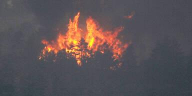 Waldbrand Colorado