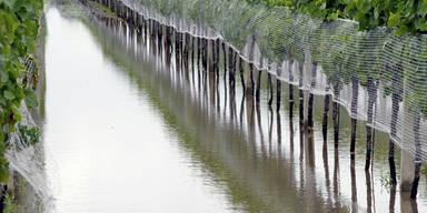 Überschwemmter Weingarten in Podersdorf