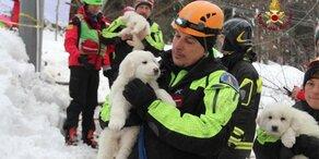 Hundewelpen aus Lawinen-Hotel gerettet